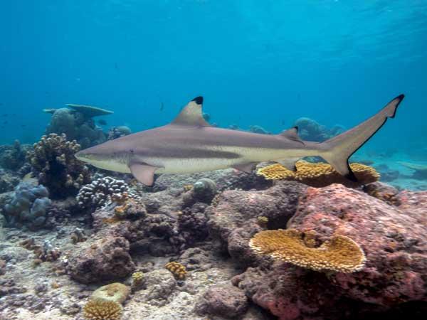 Scuba diving day trips Phuket