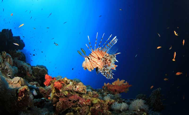 Phuket dive blog discover scuba
