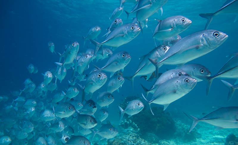 Try scuba in Phuket